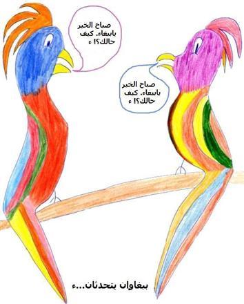 perroquet1
